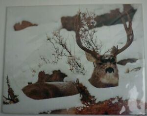 Don McFarlane, signed White Tail Deer, Buck in Snow, Photograph, 11x14 unframed