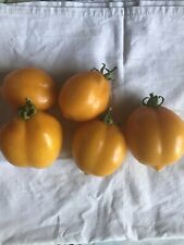 10 Graines De Tomates Citron Lemon Tree (bio)