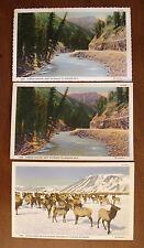 Vintage Set of 3 Postcards - Jackson Hole, Wyoming (Lot 13)