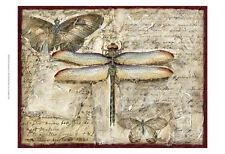 Poetic Dragonfly II ists Art Poster Print by Chariklia Zarris, 19x13