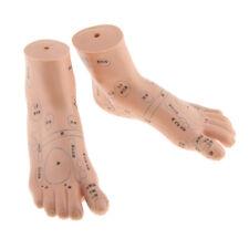 Foot Reflex Zone Acupuncture Point Model Sculpture PRO Teaching Sculpture