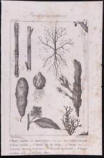 1840 - Botanica - Matrice Incisione