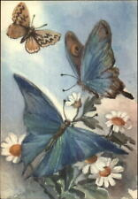 Chiostri Butterfly #170 Postcard