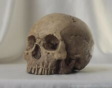 HUMAN SKULL REPLICA (natural) full size realistic, plaster of Paris