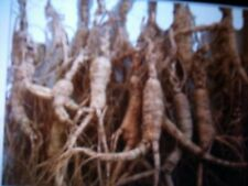 Sale 15 GRAM  BIG DRY WILD GINSENG ROOTS VERY OLD With LONG BIG NECKS  12-30 Yr