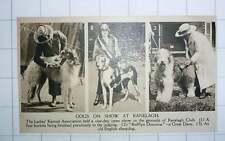 1920 Ladies Kennel Association Rufflyn Dominia Great Dane
