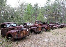 1950s Rusted Pickup Trucks line up in junk yard 8 x 10 Photograph