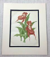 1877 Antico Botanico Stampa Siberiano da Donna Pantofola Fiore Cromolitografia