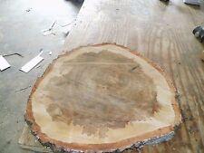 Baumscheibe, Holzscheibe, ca.65 x 5 cm, Tischplatte, Birke, Rinde  fällt ab!!