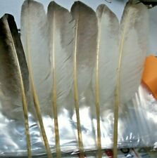 GOOSE NATURAL SCHRAGER FEATHERS 6 FEATHERS 6-8 INCHES LONG { U.S.A. SELLER }