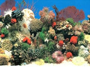 "12"" TALL Red Coral Waterproof Aquarium / Vivarium Background Poster Picture"