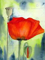 POPPY FLOWER BUD RED WATERCOLOUR PHOTO ART PRINT POSTER PICTURE BMP2348B