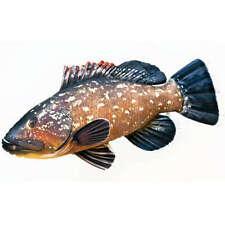 Kuschelfisch The Grouper Pillow 100cm Fish Pillow Kuscheltier Stofftier Geschenk
