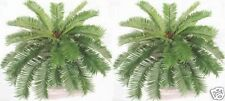 Two 27 inch Long 35 Fronds 36 inch Spread Artificial Silk Sago Ferns Cycas Palm