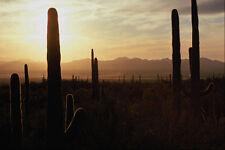 611054 Sunset Over Sonoran Desert A4 Photo Print