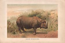 1895 VICTORIAN NATURAL HISTORY PRINT ~ INDIAN RHINOCEROS
