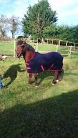 SALE Quality Traditional Horse Pony Show Travel Rug ideal for Embroidery NOW £15