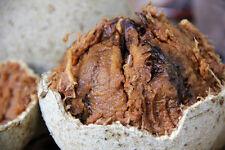 Liveseeds-délicieux fruits tropicaux bois pommes 10 graines rares
