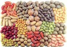 100 Potato Vegetable Seeds Rare 20 Kinds Organic Perennial Garden Plants non-GMO