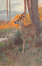 DEER BUCK IN FOREST FALL AUTUMN LEAVES ANIMALS WILDLIFE ANTIQUE ART PRINT 1901
