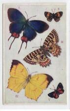 FOREIGN BUTTERFLIES: Butterflies on the Wing push-out postcard (C29638)
