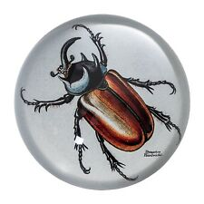 Red Beetle Paperweight in Giftbox by Jay - BIOLOGICA range