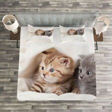 Animal Quilted Bedspread & Pillow Shams Set, Scottish Fold Kittens Print