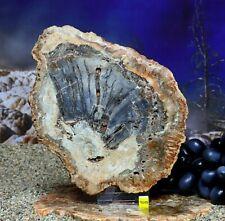 More details for huge petrified fossilised wood section slice slab prehistoric palm tree 1122g