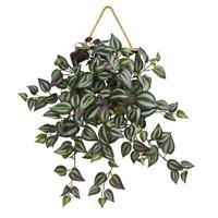 Live Wandering Jew Purple aka Tradescantia pallida Hanging Plant Fit 1GAL Pot