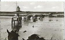 Fotokarte Pferdekutschen, Wattwagen Nordseeheilbad Insel Neuwerk Ansichtskarte