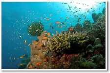 Coral Reef in Havelock, Andaman - NEW Animal Wildlife POSTER