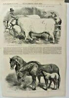 Antique Print The Illustrated London News 1856 Royal Agricultural ShowChelmsford