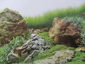 """19"""" TALL Reclaimed Waterproof Aquarium / Vivarium Background Poster Picture"""