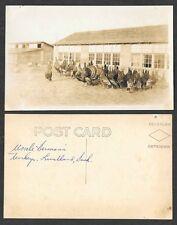 Old Canada Real Photo Postcard - Luseland, Saskatchewan - Uncle Herman's Turkeys
