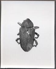 Unusual Vintage Photo Beetle Bug Scientific Specimen Entomology 258126