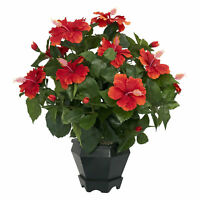 Hibiscus W/Black Hexagon Vase Silk Plant
