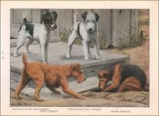 Five Different Terrier Dogs, Irish, Welsh, Smooth & Wire Fox, Fuertes 1919