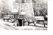 Lilley, CA  Redwood Park  RPPC 1930s Tree House In Giant Tree