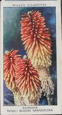 No.25 KNIPHOFIA Garden Flowers by Sudell - W.D.& H.D. Wills 1939