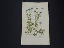 Sir John Hill, Botanical, The Vegetable System 1761-1775 Globewort #01