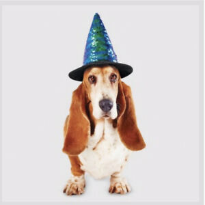 Witch Hat Halloween Dog Costume - X Large-Hyde & EEK! Boutique-New