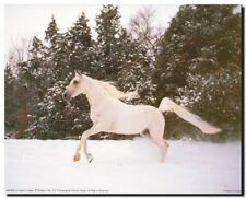 White Arabian Running Horse in Snow Wall Decor Art Print Picture (16x20)
