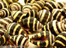 Five Bee Hive Seashells Shells Healing Reiki Transformation Change Grids
