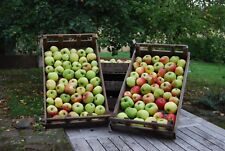 Rustic Vintage Wooden Apple and Vegetable Crate / Box