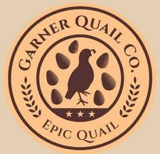 Jumbo Brown Coturnix quail hatching eggs 35 Great Packaging!