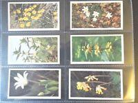 1986 Grandee BRITAIN'S WILD FLOWERS flower set 30 cards Tobacco Cigarette