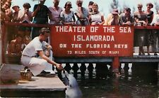 c1950s Jeannie The Porpoise, Theater Of The Sea, Islamorada, Florida Postcard
