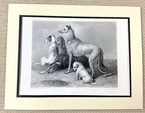 Antique Engraving Print Sir Edwin Landseer Dog Painting Terrier Whippet Lurcher