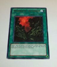 Murmur Of The Forest PHSW-EN058  Yugioh Yu Gi Oh! Holo Foil  Rare