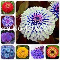 Zinnia Bonsai 100 PCS Seeds Rare Flowers Plants Garden Free Shipping 2019 New N